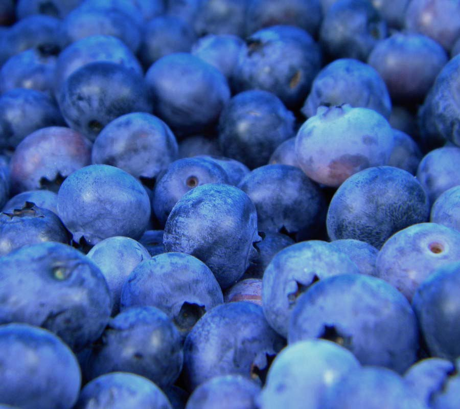 Infrastructure update helps berry growers to innovate